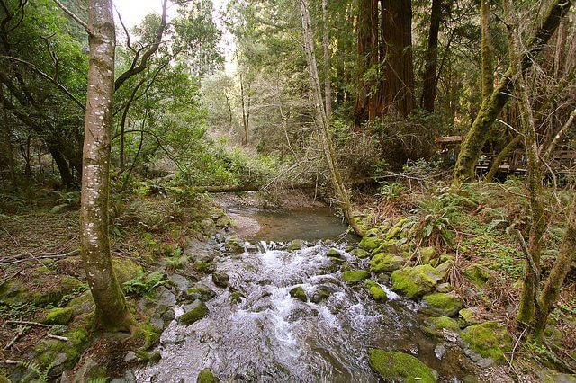 While it may look safe, natural water sources can contain hidden hazards, such as dangerous microorganisms.