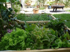 Garden vegetables are nutritious and delicious