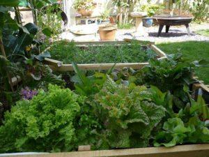 Garden vegetables are nutritious and delicious